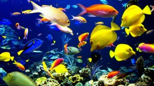 Учимся пользоваться форумом - zhivotnye-ryba.jpg